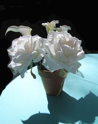 Flower_pen