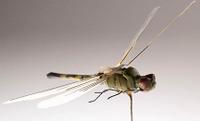 Dragonfly_robot_cia