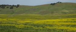 Yellow_wildflowers_2