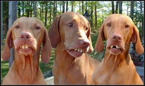 Dogsbraces_1