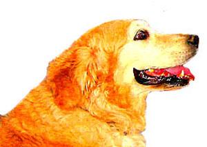 Dogsmile