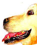 Dogsmilelittle