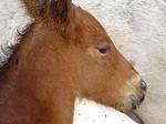 Foalwmother